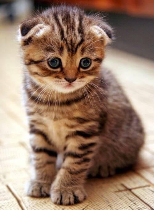 Rekomendasi Nama Lucu Untuk Kucing Jantan Dan Betina Dan Artinya
